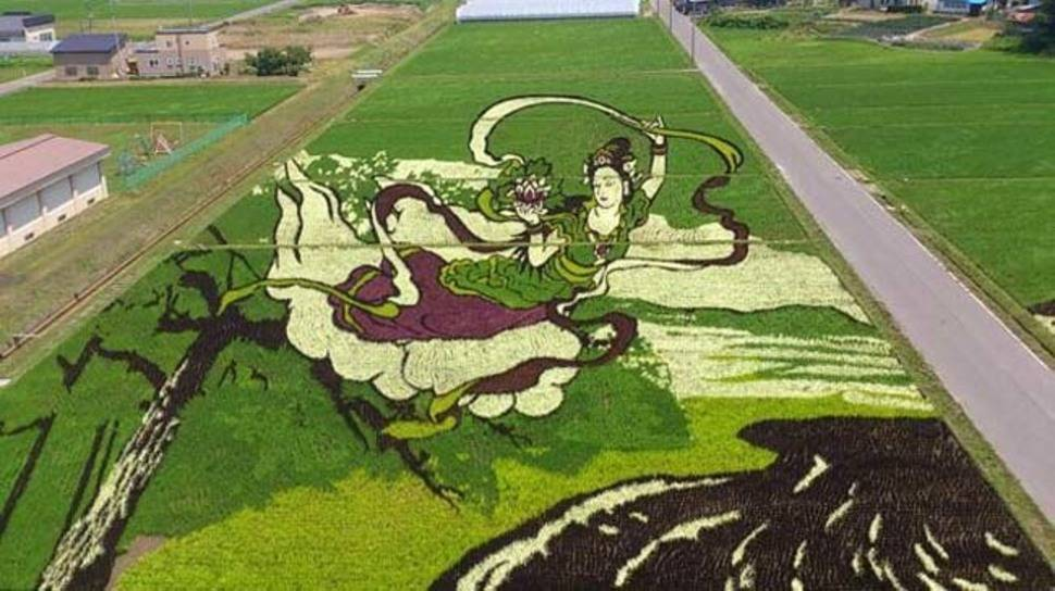 Tanbo Rice Paddy Art - Japon 1