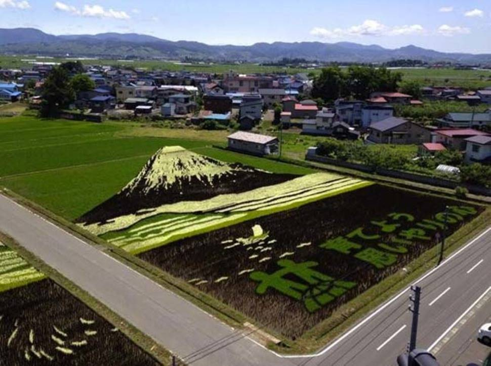 Tanbo Rice Paddy Art - Japon 2