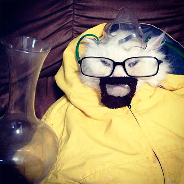 gato-breaking-bad
