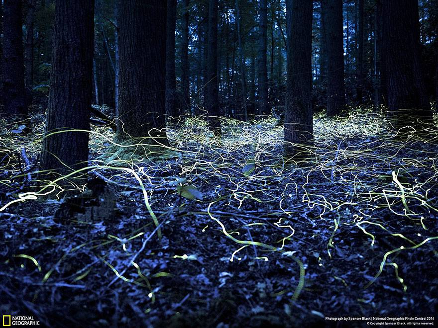 libelulas-en-el-bosque-national-geographic