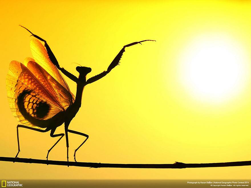 mantis-religiosa-national-geographic