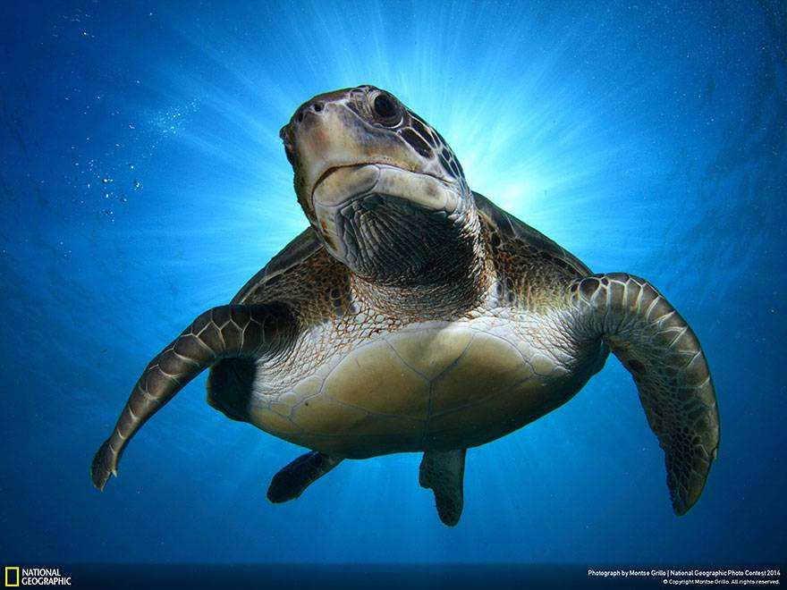 national-geogrtortuga-national-geographic
