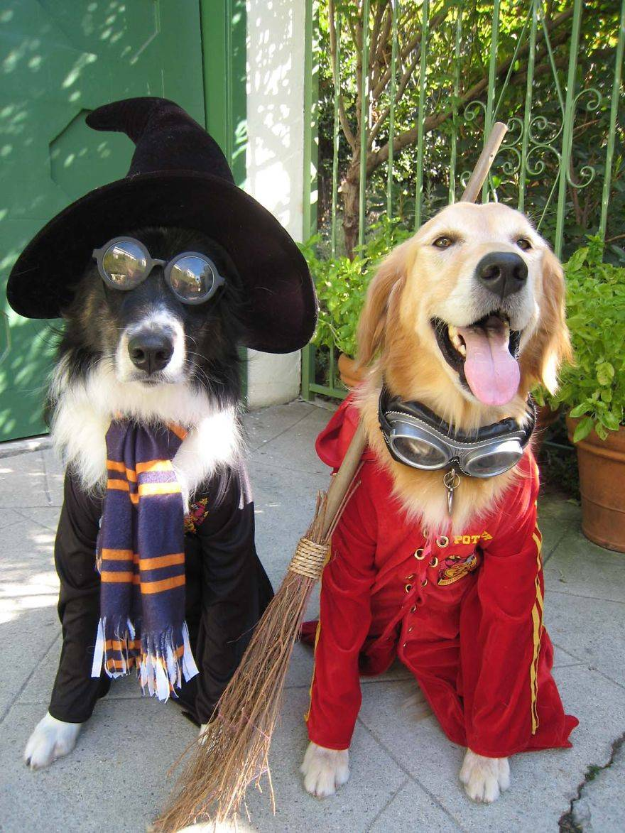 perros-harry-potter